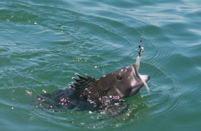 catching a black bass