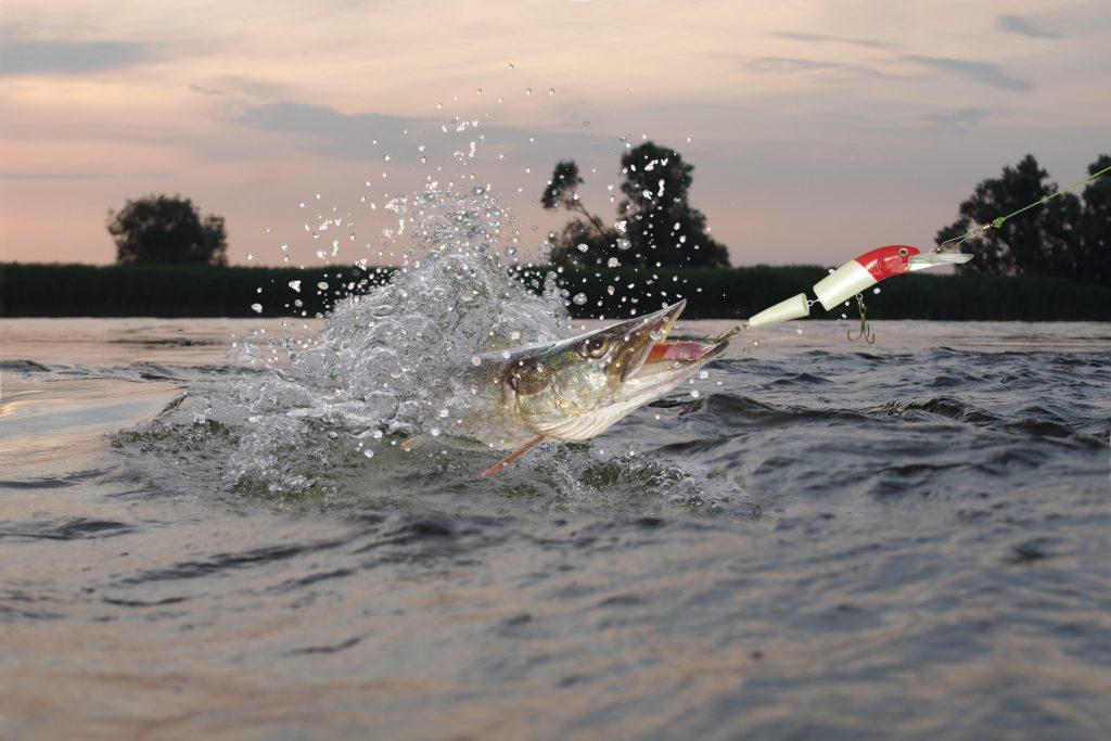 catch pike river fishing