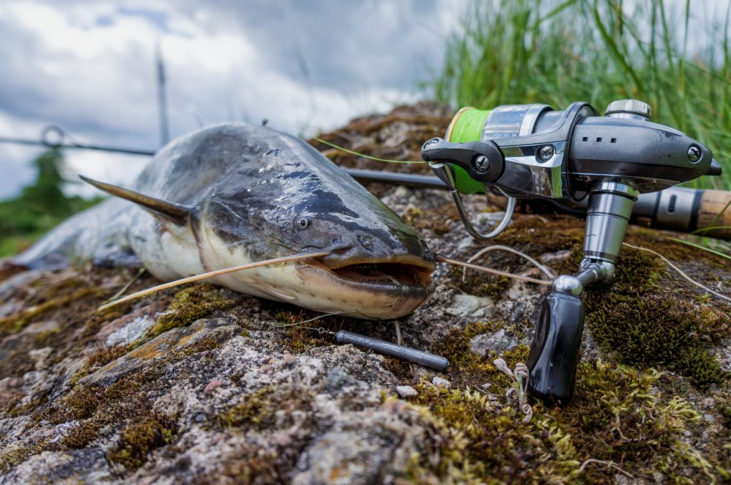 Best Catfish Poles and Spinning Rods