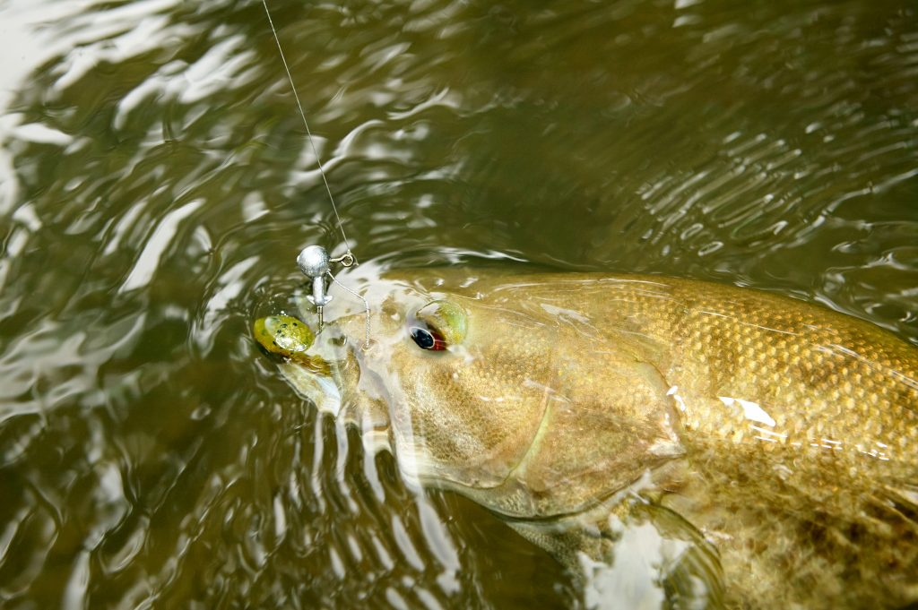 fishing for bass - small mouth - large mouth bass