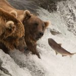 Fishing Trips to Alaska
