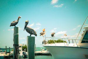 florida keys inshore salt water fishing - best fishing spots in the usa