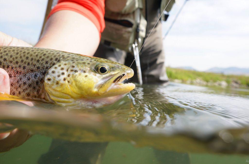 lake trout fishing tips