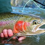 Trout Fishing - Fishing for Trout