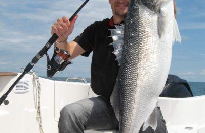 white bass fishing