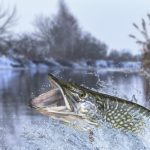 Winter Pike Ice Fishing